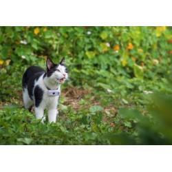 GPS Tracker Katze
