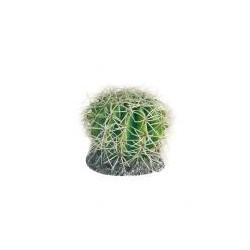 Terrarienpflanze Kaktus S
