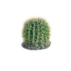 Terrarienpflanze Kaktus M