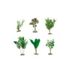 Seidenpflanzen S...