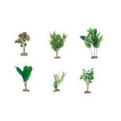 Seidenpflanzen mittelgroß