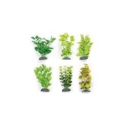 Seidenpflanzen aus...