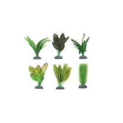 Seidenpflanzen sehr gute...